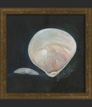 KG Seashell No5
