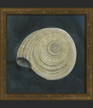 NT Seashell No8