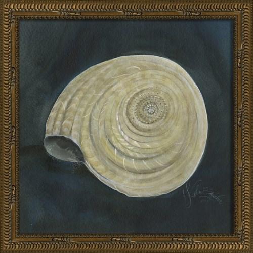 KG Seashell No8