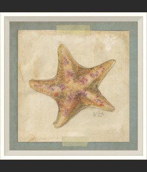 WC Starfish 4