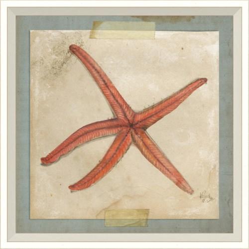 WC Starfish 5