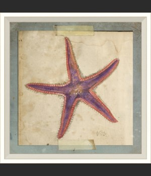 WC Starfish 6