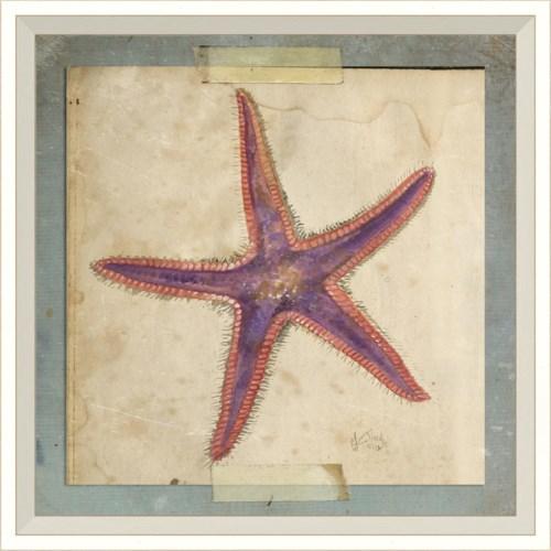 WC Starfish 6