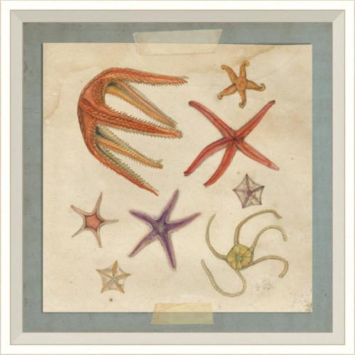 WC Starfish 7