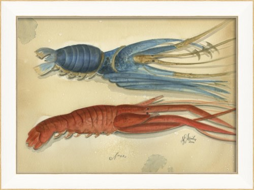 SS Ocean Lobster 02