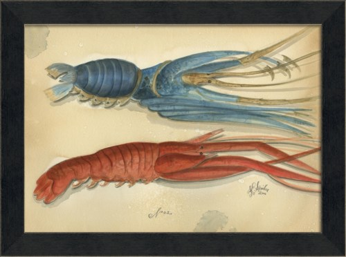 MI Ocean Lobster 02