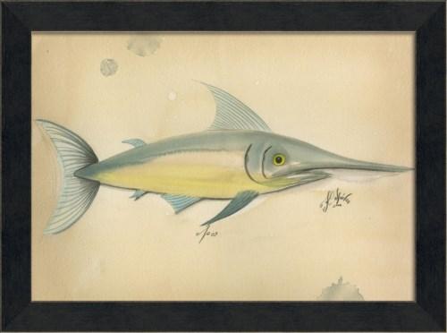 MI Ocean Swordfish 09