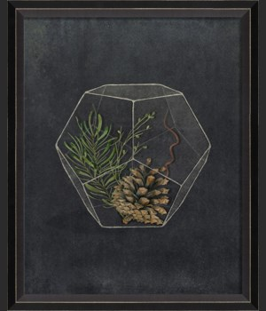 BC Terrarium Life Branching Out Before Me sm