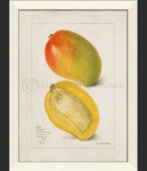 LN Mango No3