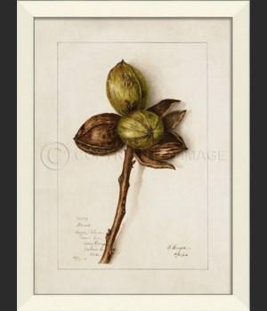 LN Nuts No9