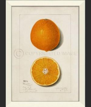 LN Orange No2