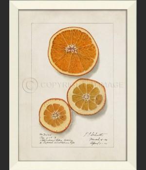 LN Orange No5