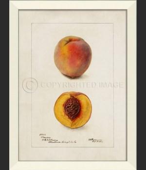 LN Peach No1