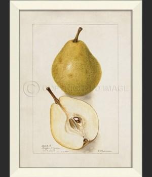 LN Pear No3