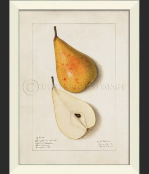 LN Pear No6