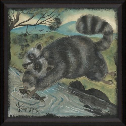 BC Raccoon
