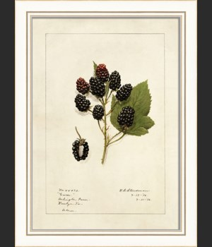 KI Blackberries No2