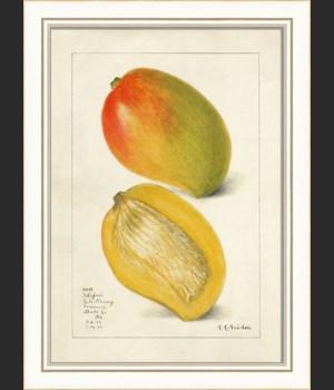 KI Mango No3