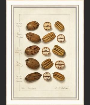 KI Nuts No1