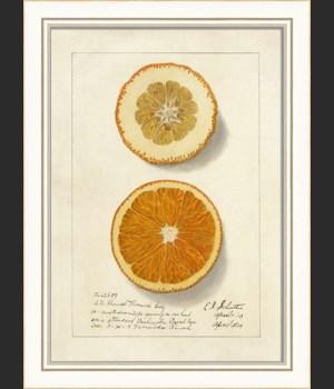 KI Orange No4