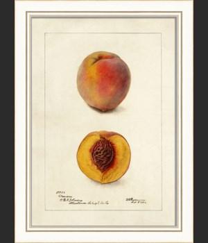 KI Peach No1