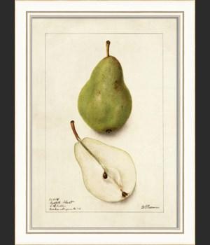 KI Pear No2