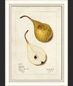 KI Pear No7
