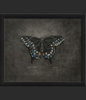 EB Papilio polyxenes on black sm