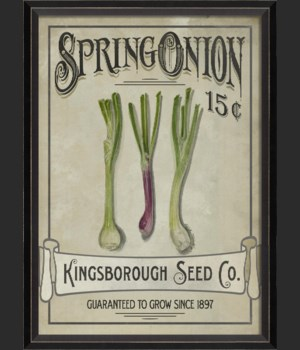 BC Spring Onion Seeds