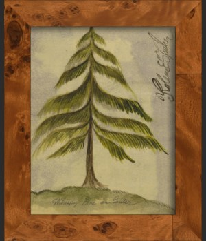NA Pine Tree