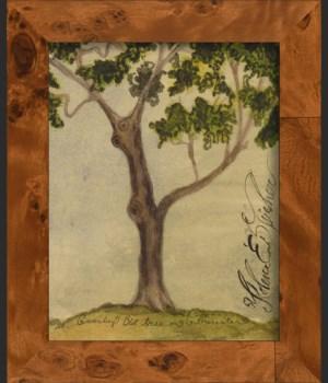 NA Gnarley Tree
