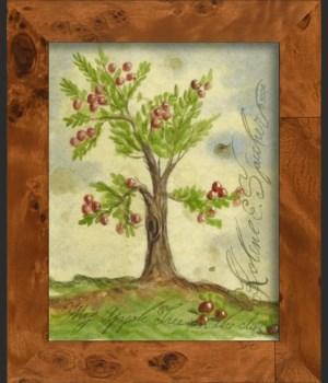 SH Apple Tree