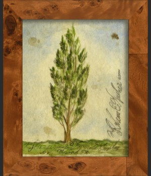 NA Poplar Tree