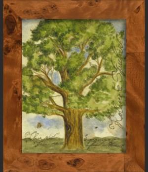 NA Sycamore Tree