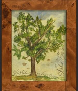 SH Walnut Tree