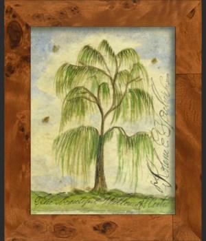 NA Willow Tree