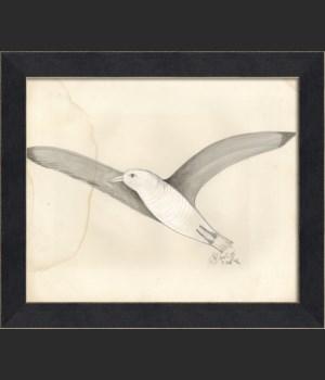LI the great white seagull