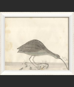 WC the happy curlew