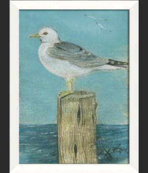 LN Seabird 1