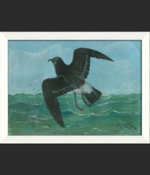 LN Seabird 3