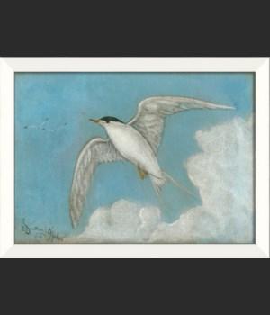 LN Seabird 4