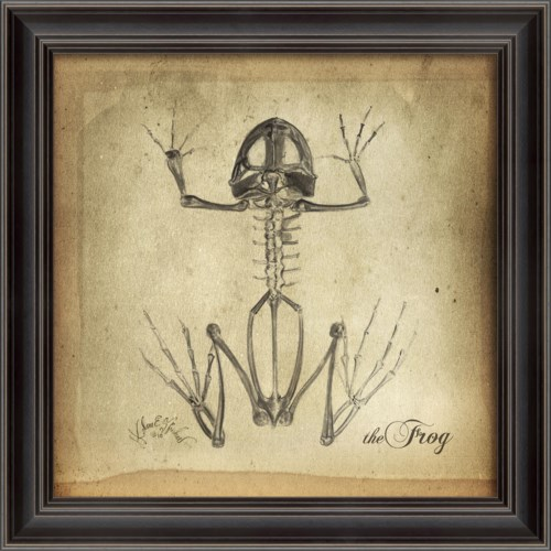 LS Frog Skeleton on White