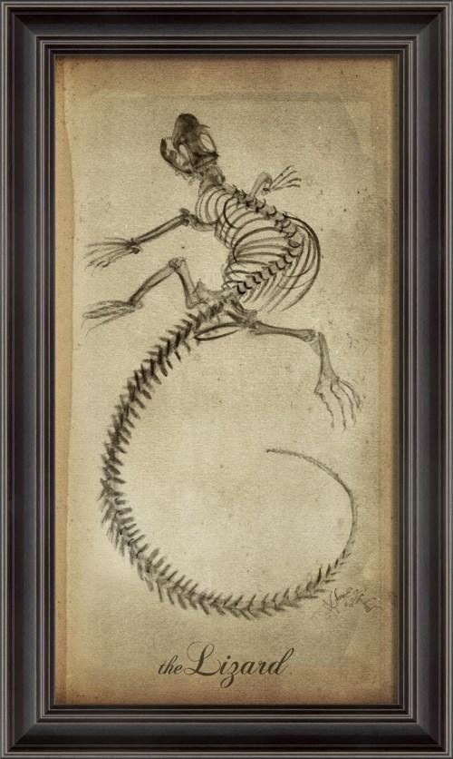 LS Lizard Skeleton on White