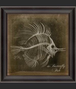 LS Butterfly Fish Skeleton on Black