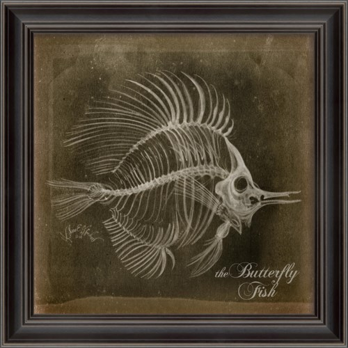 LS Butterfly Fish Skeleton on Black
