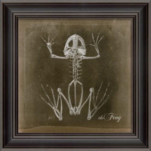LS Frog Skeleton on Black