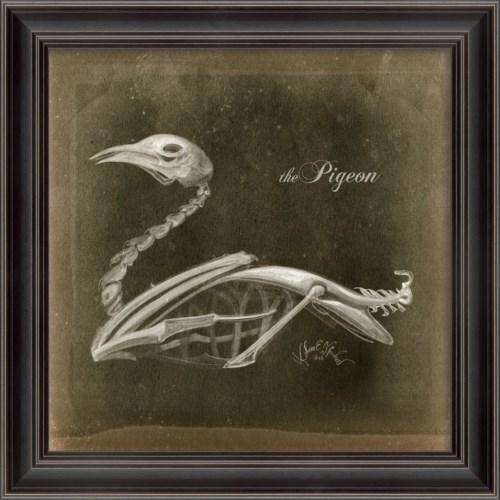 LS Pigeon Skeleton on Black