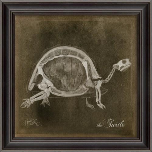 LS Turtle Skeleton on Black