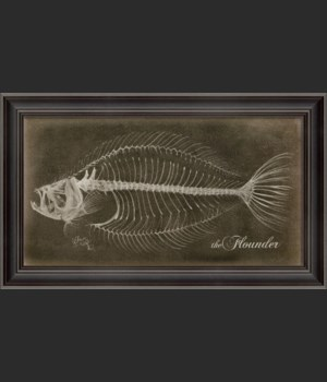 LS Flounder Skeleton on Black