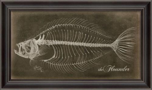 LS Flounder Skeleton on Black